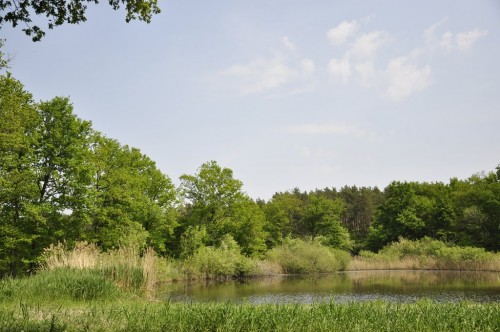 Un étang en plein milieu de la Sologne