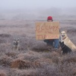 Occupy Toundra par Diane McEachern
