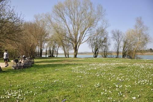 Riotte pond
