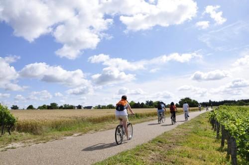 Cyclistes au milieu des champs de blé et de vignes
