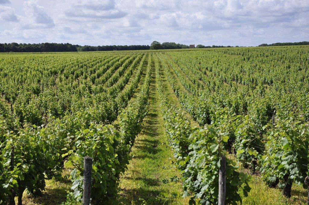 Champ De Vigne champ de vignes avant montlouis-sur-loire