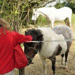 Minna dit bonjour aux poneys