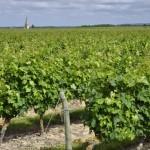 Église de Souzay-champigny émerge des vignes
